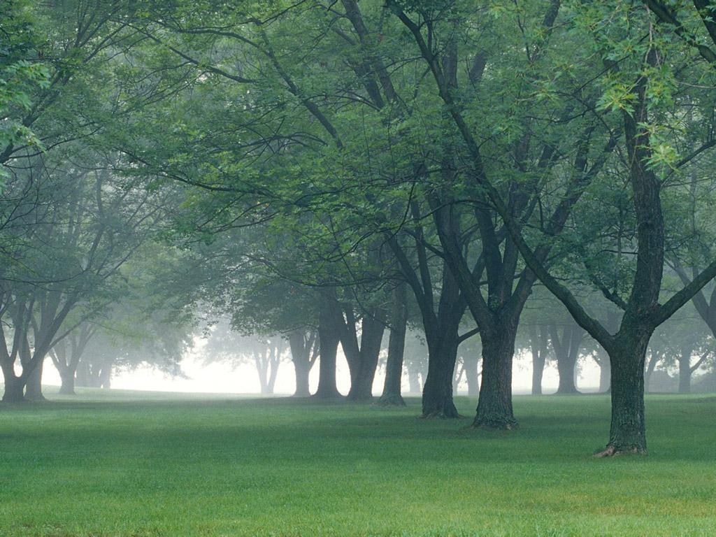 http://3.bp.blogspot.com/-WkOIoN4FUMc/TixEXCtHYjI/AAAAAAAACv4/KBlJ_frtbQk/s1600/high-definition-Nature-wallpaper-3.jpg