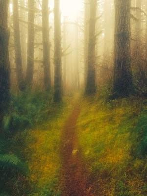 Wedekind Trail CF