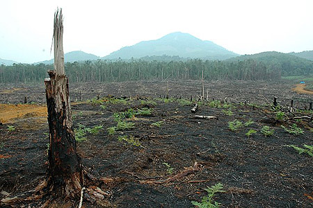 deforestation is destroying the ecosystems of Forests cover about 31% of our planet which is why deforestation is  fire is extremely beneficial to forests and ecosystems,  humans are destroying forests.