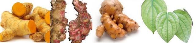Definisi dan Manfaat dari Probiotik Herbal dan Antibiotik