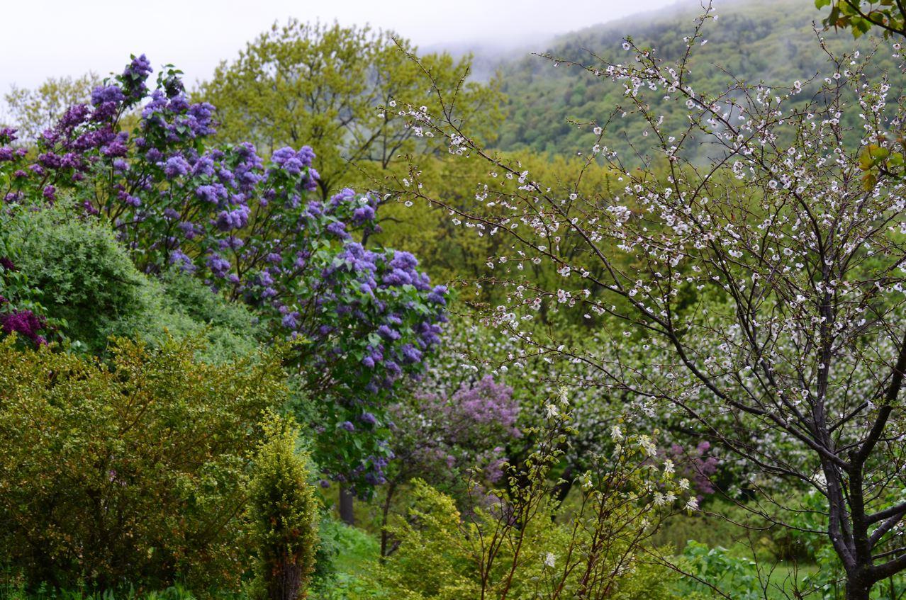 Flower Hill Farm Lilac Time