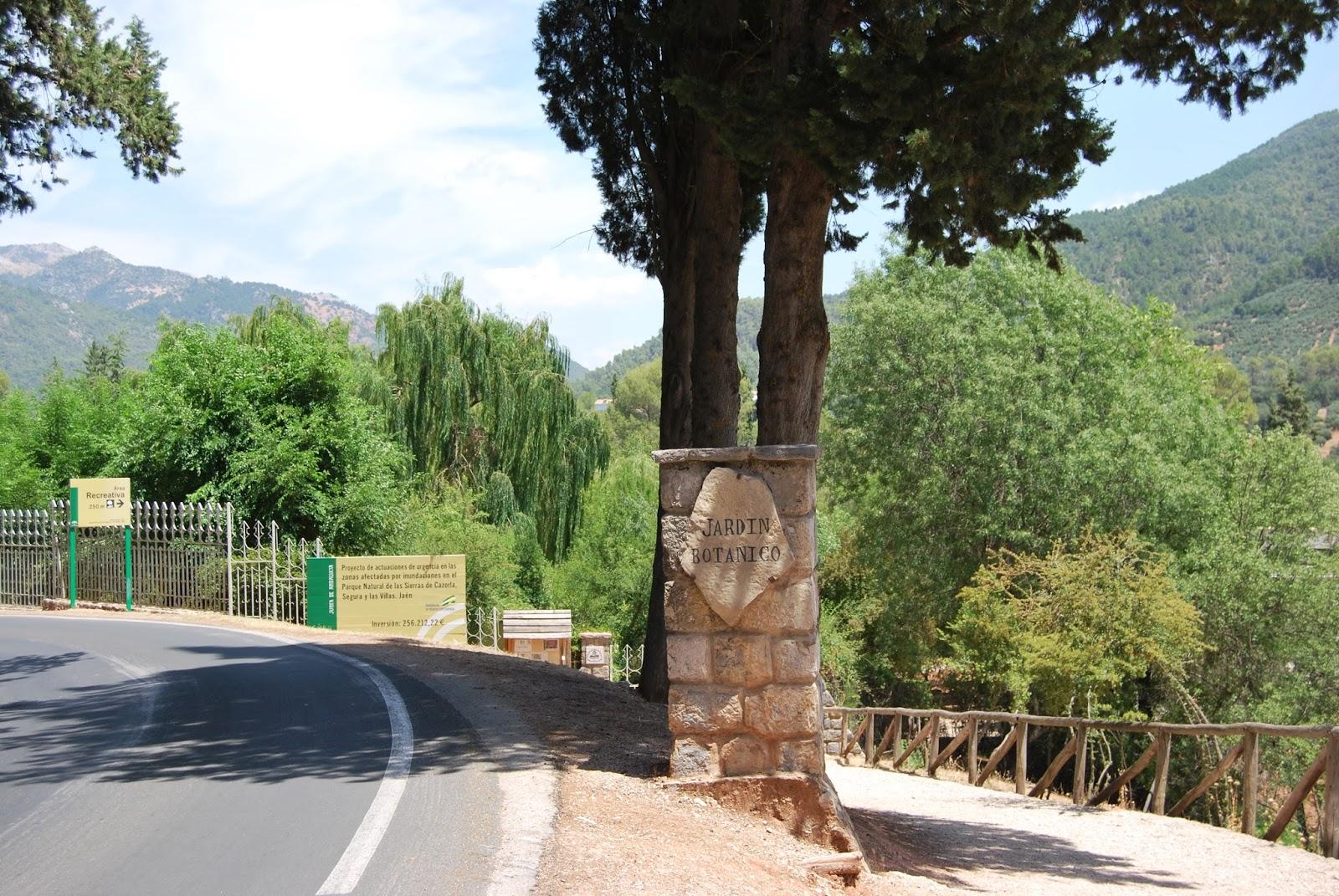 Plantar cientos de arboles cazorla jardin botanico torre for Arboles del jardin botanico