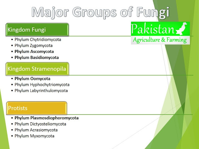 Classification of fungi by Alexopoulus and Mims