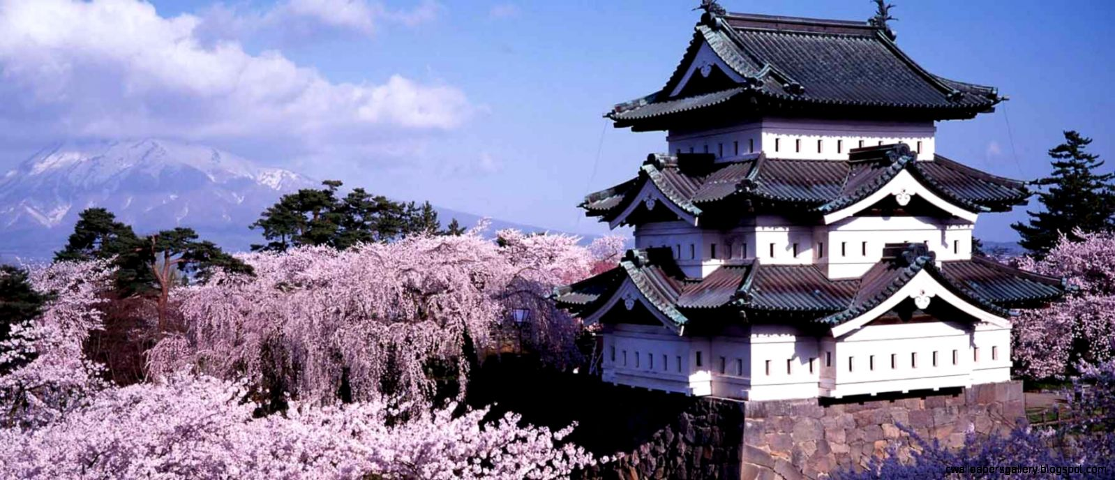 Where to See Cherry Blossoms in Japan