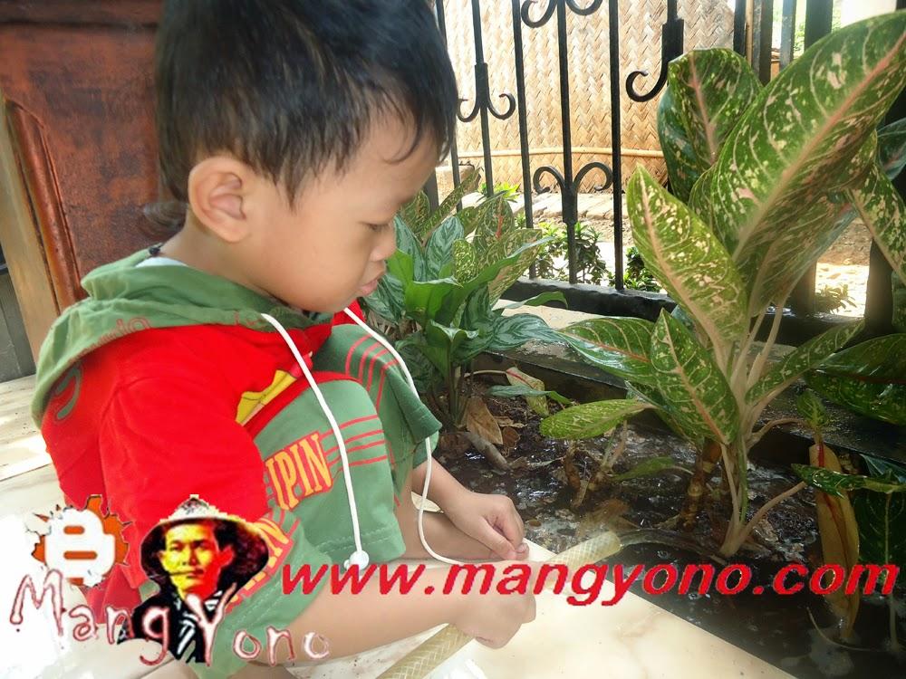 "Anak saya ""Gigin "" sedang nyiram tanaman bunga dibawah kanopi"