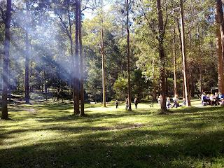 Australian Bush, Picnic, Koala Park