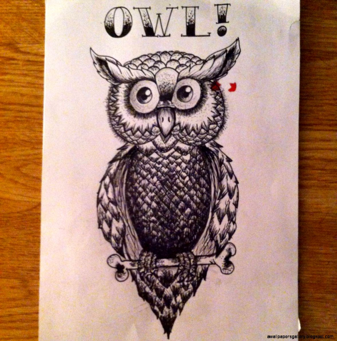 Owl Drawing Tumblr Wallpapers Gallery