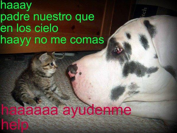 Selfie De Perros Imagenes Graciosas - Frases y Fotos