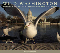 Wild-Washington-Book-Cover.jpg