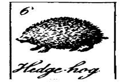 the hedgehog chronicle