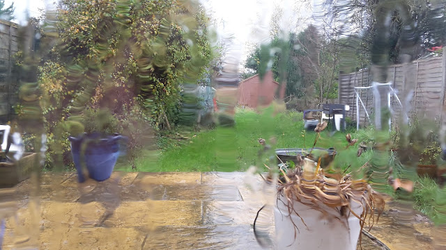Project 365 2015 day 333 - Rainy rugby day // 76sunflowers