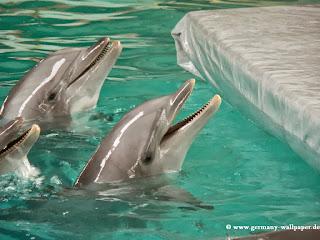 Lustige Delfine haben Spaß