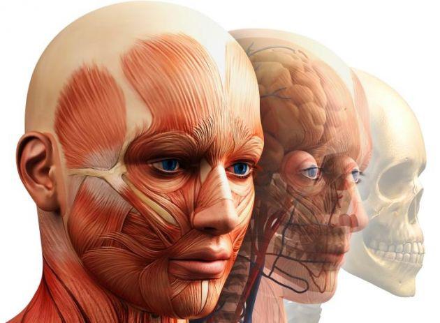 Dispositivos electrónicos y materiales sintéticos dentro del cuerpo ...