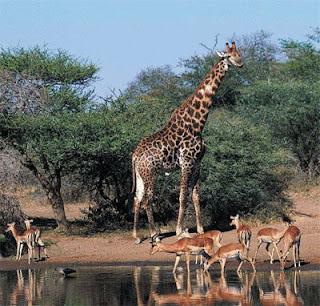 Taman Konservasi Dunia Terluas