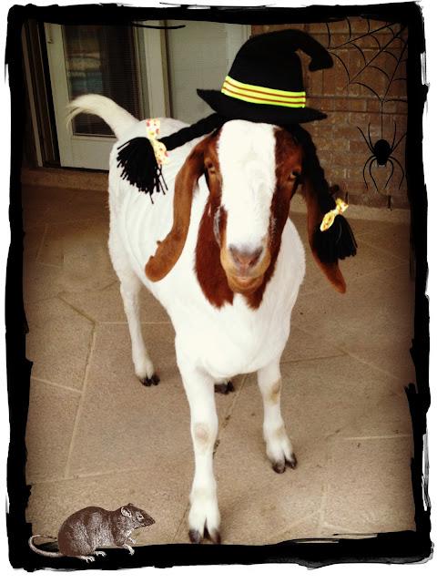 Goat, Halloween