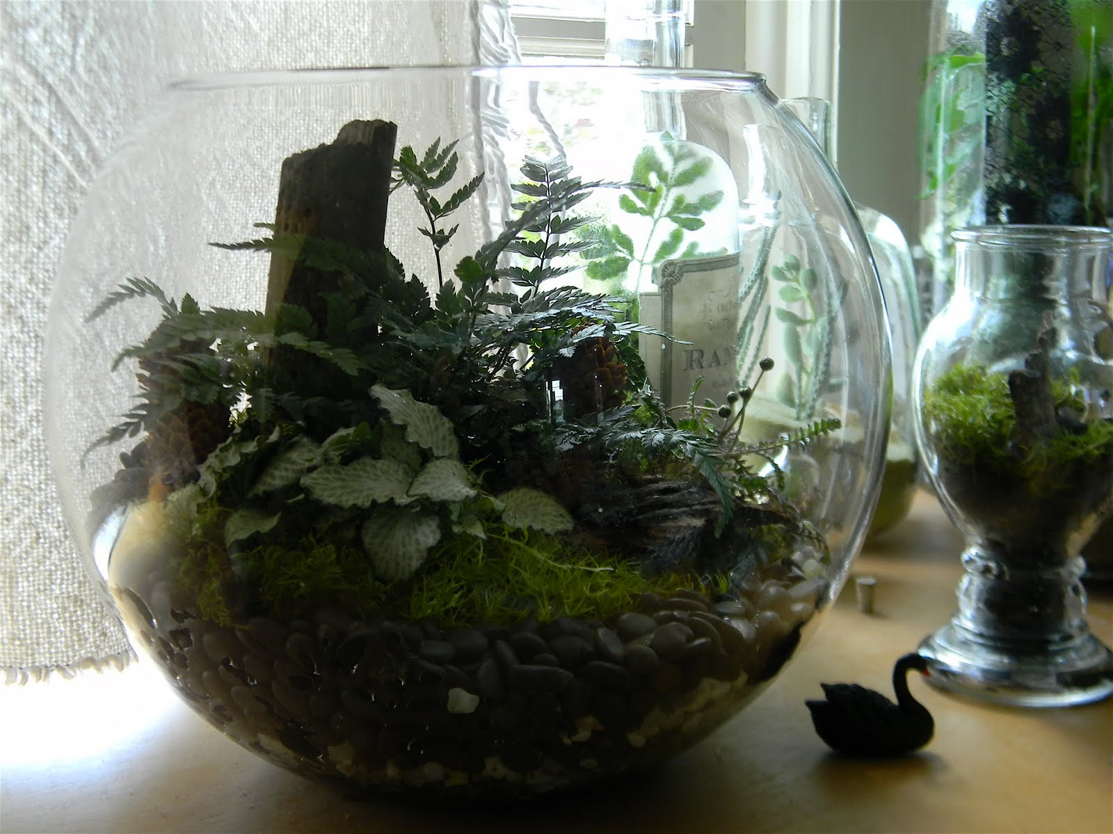black swan garden design problems with terrariums. Black Bedroom Furniture Sets. Home Design Ideas