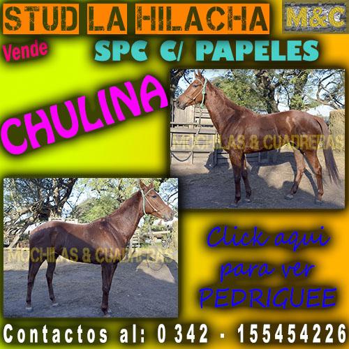 SLH - CHULINA
