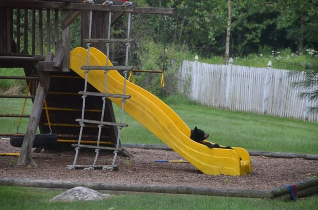Baby bears play on slide (5 pics), baby bear pictures, bear cubs, bear family, funny bear pictures