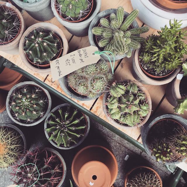 markthal rotterdam cactus cacti inspiration