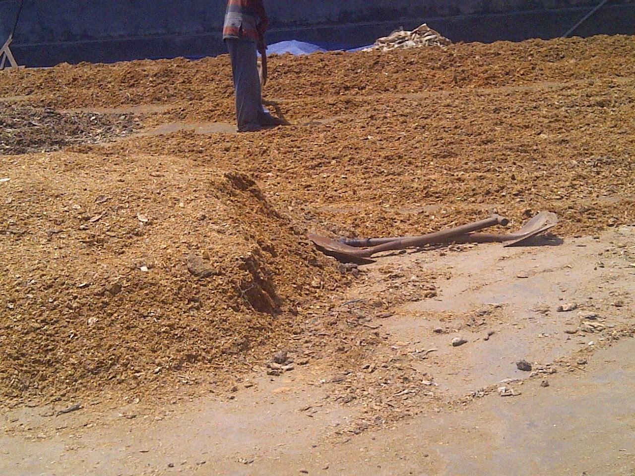 Proses Pengeringan Ikan Untuk Dijadikan Tepung