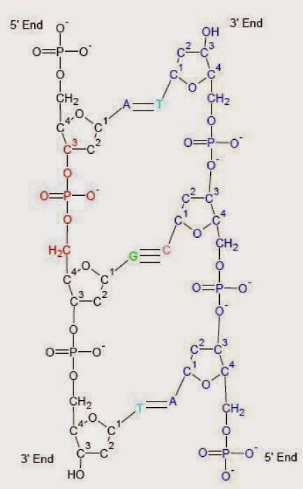 Manfaat Penting DNA