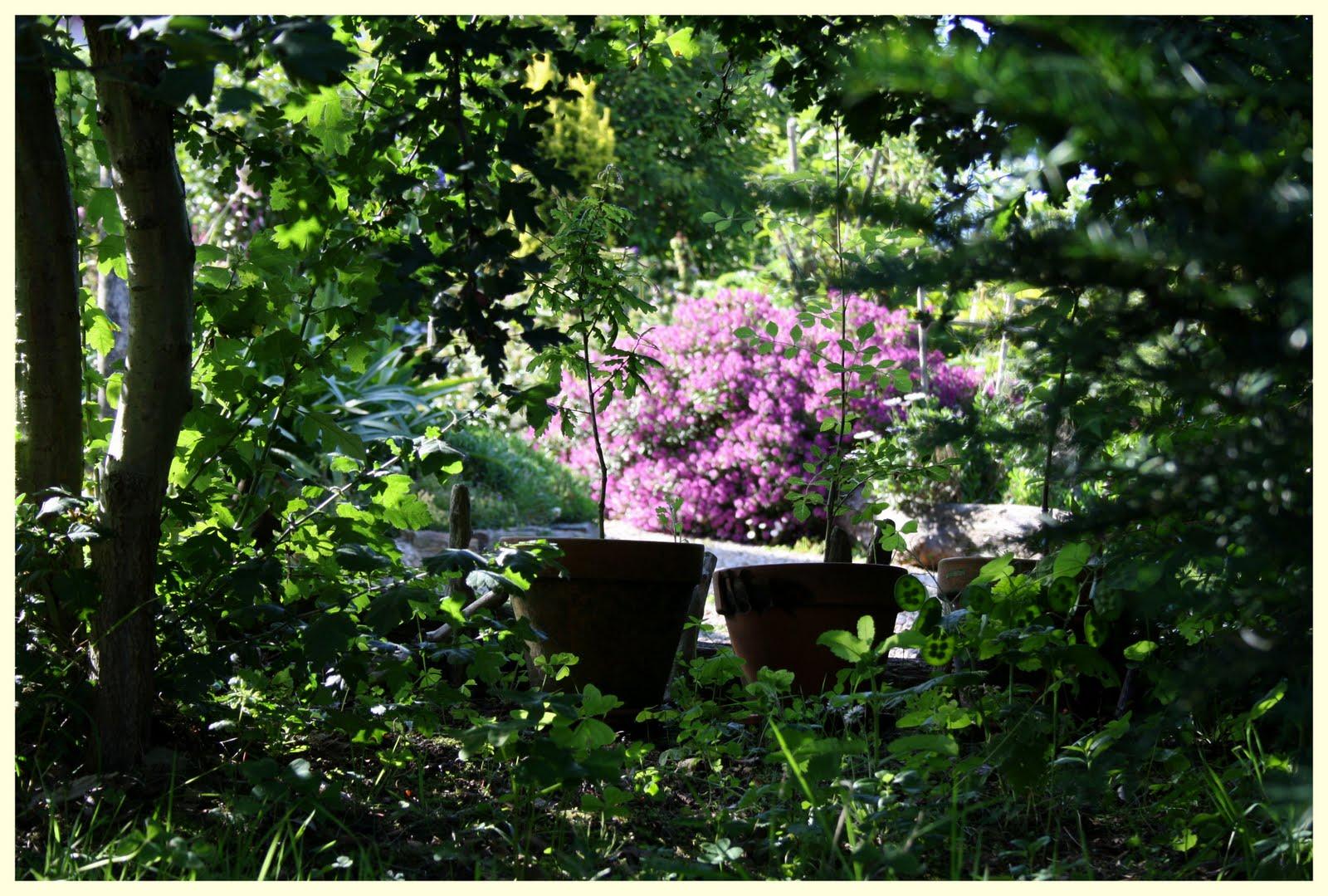 El jard n de margarita en junio for Jardin 42