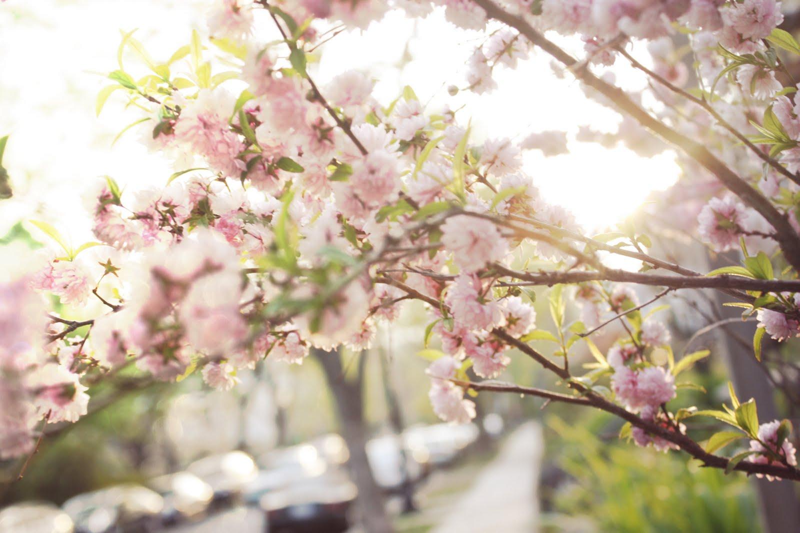 http://3.bp.blogspot.com/-WnNEcI6gFgg/Ta5Ww0QTSbI/AAAAAAAACc0/ki5Zdk-7Wjg/s1600/pink%2Bfluffy%2Bflowers.jpg