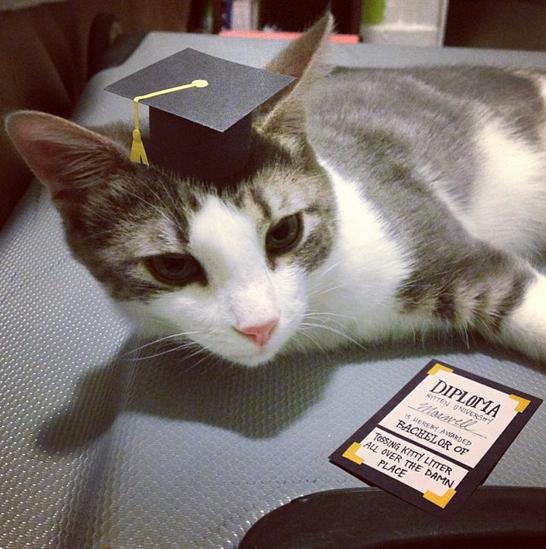 Kitty wears tiny hats (15 pics), tiny hats on cats, cute cats, kitten pics, cute kittens