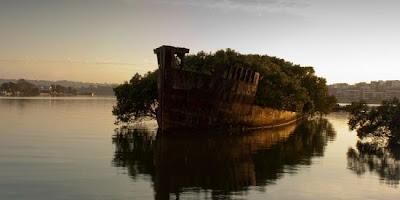 SS Ayrfield floating mangrove asalasah.blogspot.com