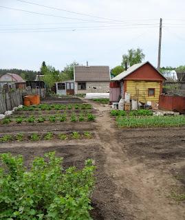 17.05. Сегодня на неделю раньше обычного из-за теплой погоды закончил весеннюю посевную. Посеял последние оставшиеся овощи - огурцы, бахчевые, кукурузу. Осталась только рассада.