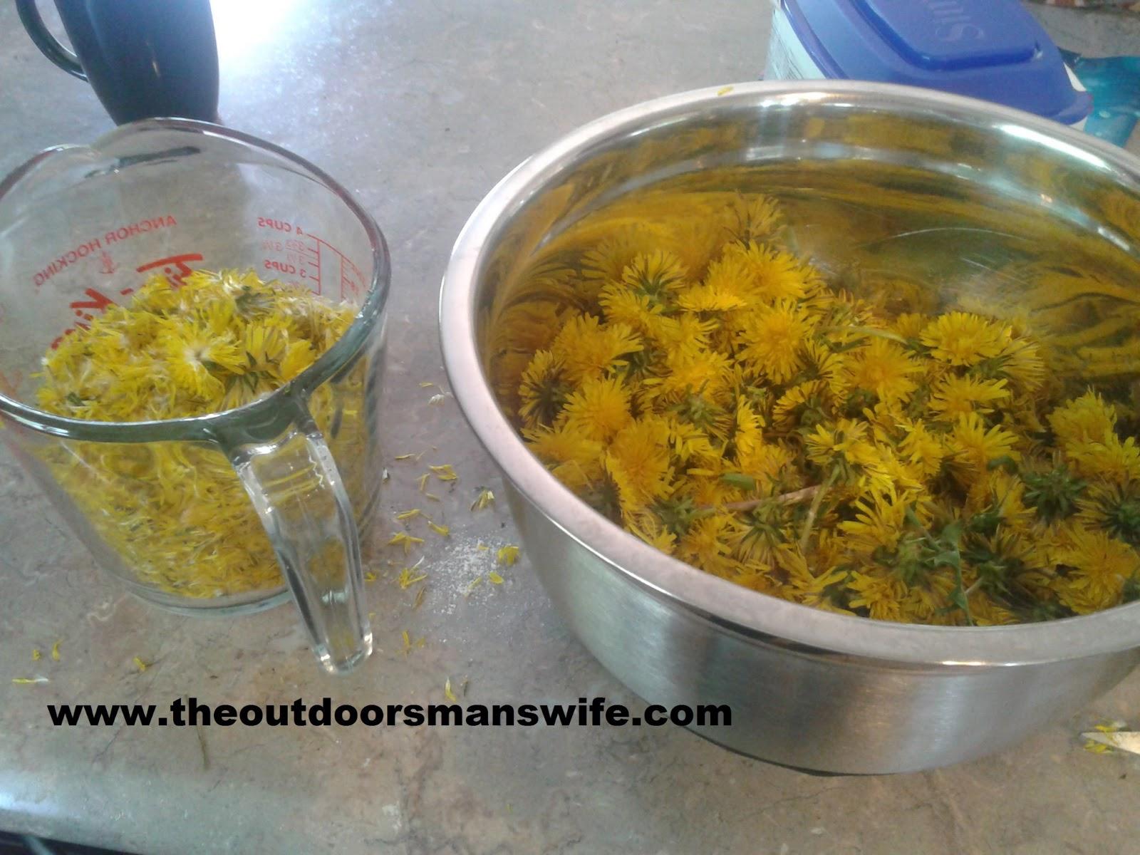 Preparing dandelions for wine