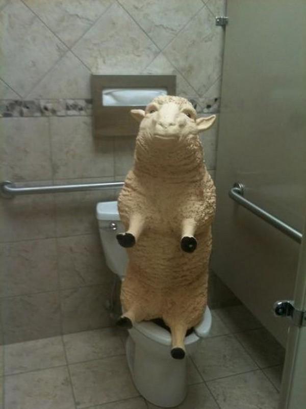 Domba di wc