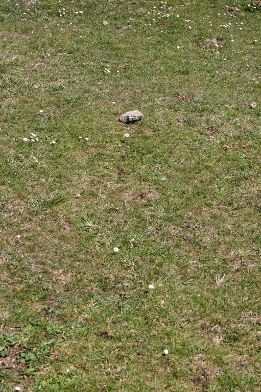 la piedra en el camino pequeña