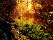 We have selected the list of best top 27 Hd Wallpaper Nature Pictures. (hd wallpaper nature)