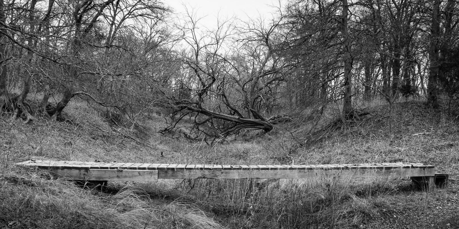LLELA, Bittern Marsh Trail