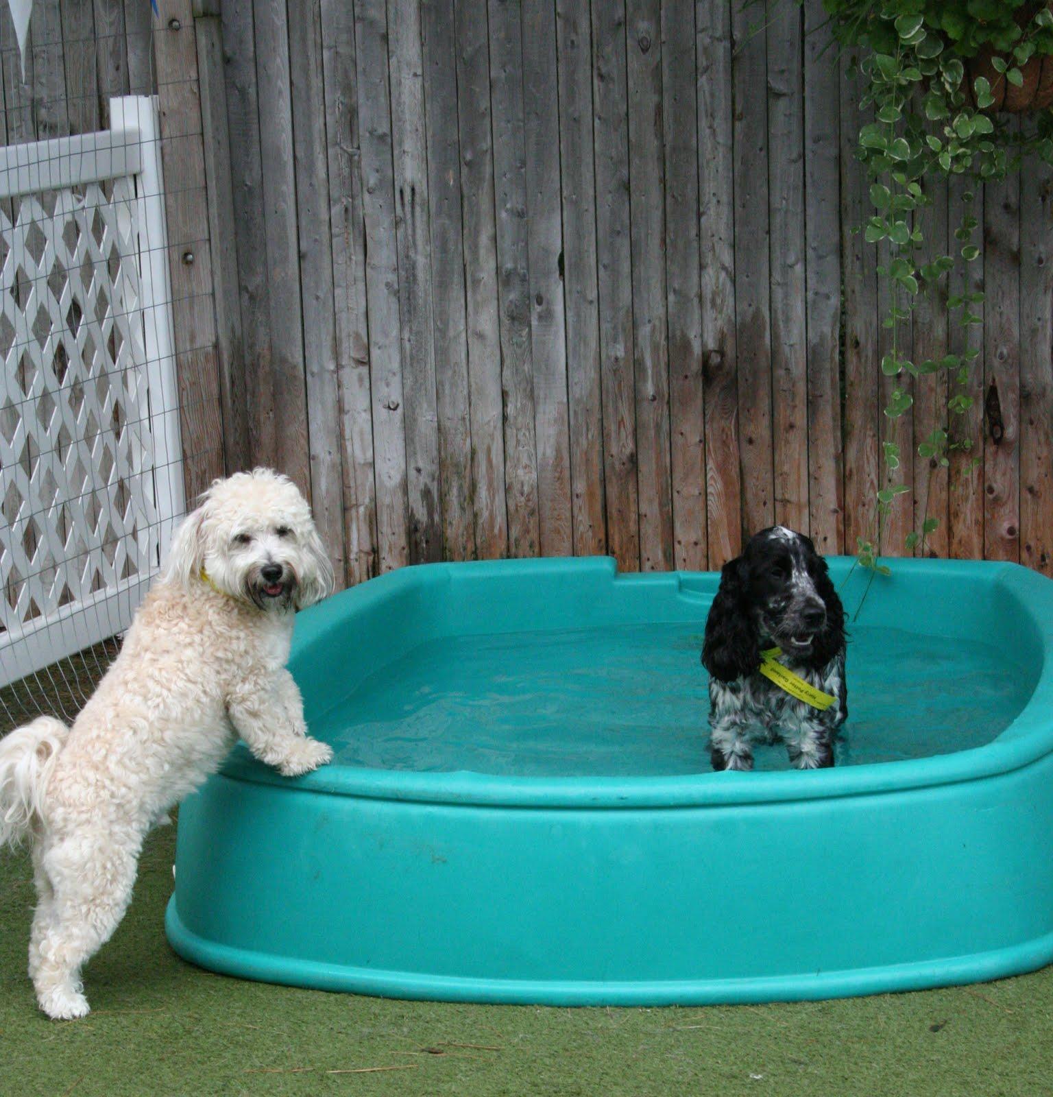 Backyard Ideas With Dogs  Small Backyard Landscaping Ideas