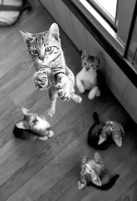 gatito saltando hacia arriba