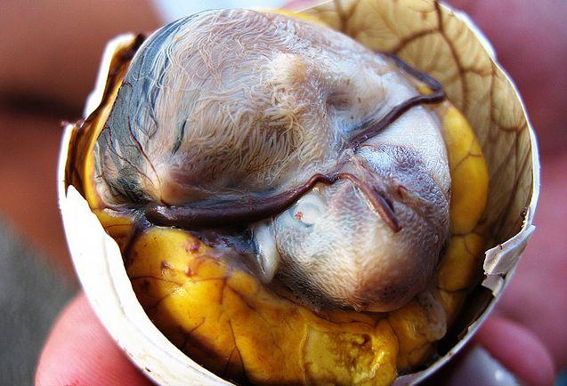 Batu Akik Agate 24 Makanan Paling Extreme Se Dunia