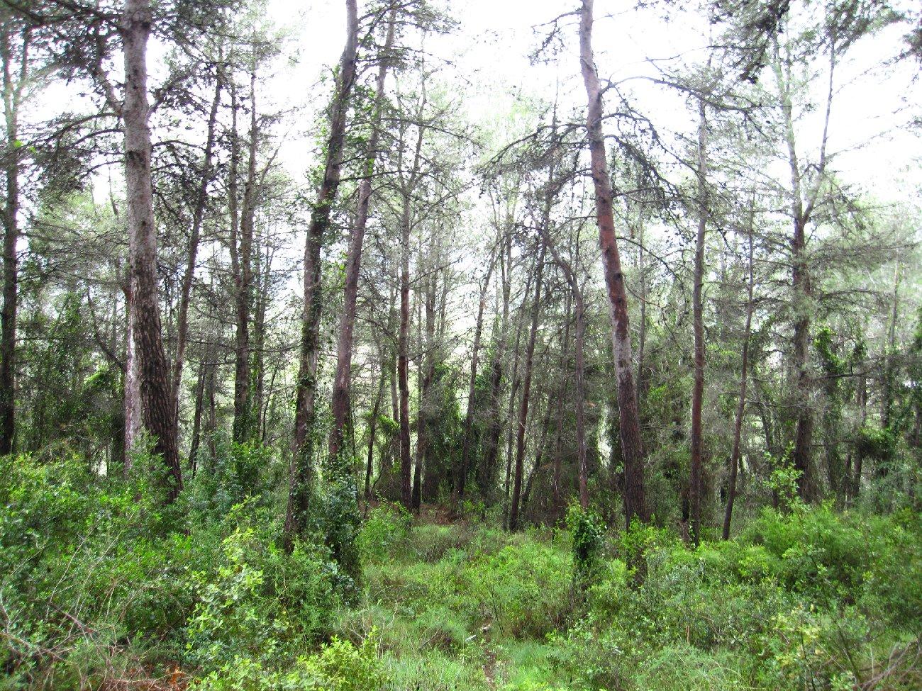 Bosc de l'ombria del Benicadell