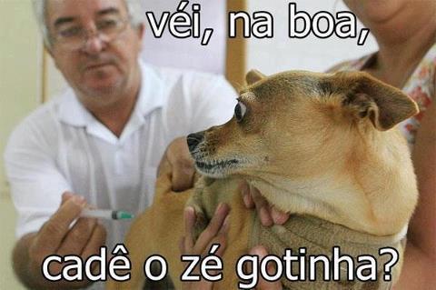 cachorro tomando inje%C3%A7%C3%A3o Fotos engraçadas no Facebook photoshop