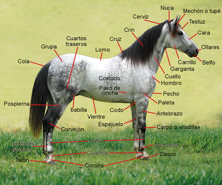 El Descanso del Escriba: Como pintar caballos