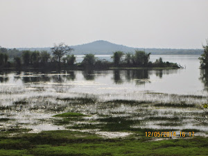 Erai dam swamp in buffer zone of Moharli range.