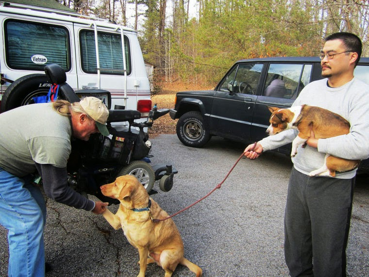 Service Dogs Shake Their Fur
