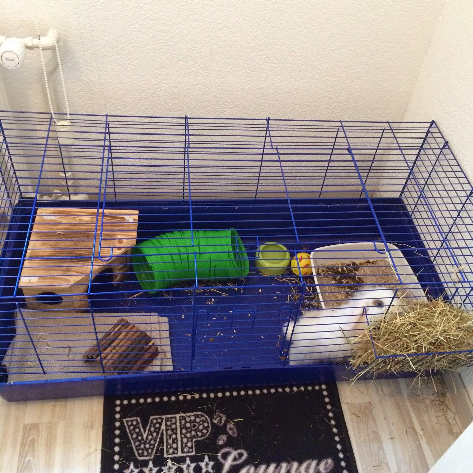 cage lapin nain. Black Bedroom Furniture Sets. Home Design Ideas
