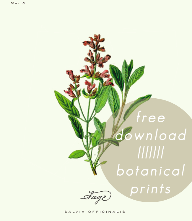 a daily something: Free Printable : Botanical Prints 02