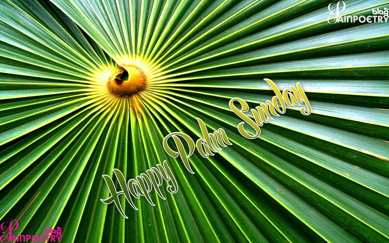 Palm-Sunday-Palm-Wishes-Image-HD