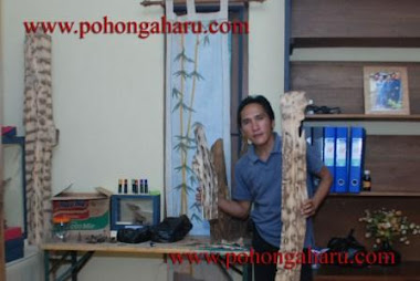 agarwood indonesia