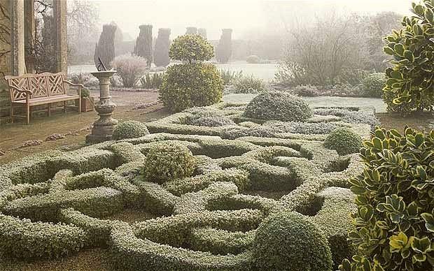 box hedge cuttings 2
