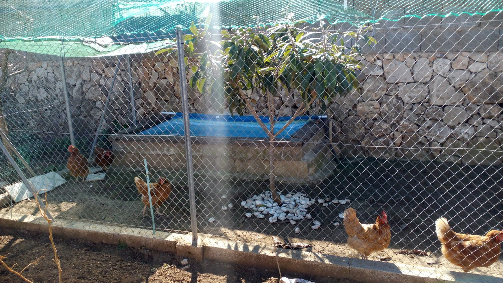 El blog de joselondres - Casas para gallinas ...