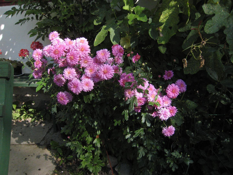 Mariehem i skåne: höstblom